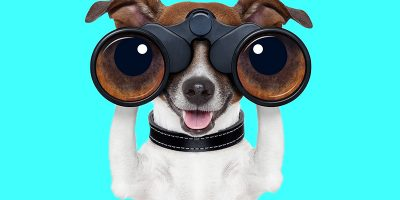 A small dog with binoculars on a turquoise background